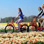 Thủ tục visa du học Hà Lan 2017